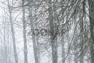 Winter abstract background, beautiful trees covered with snow, Christmas holiday nature backdrop, snowy cold season weather in forest, landscape design