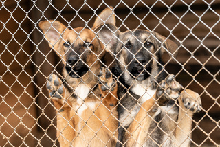 Dogs at the homeless dog shelter. Abandoned dogs