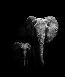 Mother and Baby Elephant