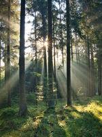 Sommermorgen im Wald