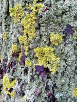 Gray tree bark with colorful mossy textured background images.
