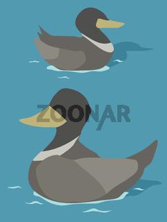 Duck Swimming Cartoon
