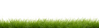 Banner - Gras
