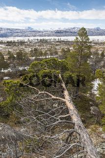 Blick ueber den Akkajaure zum Sarek Nationalpark, Welterbe Laponia, Lappland