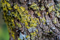 wooden textured background with damages and moss