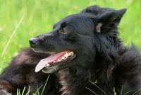 1 schwarzer Hund 4.jpg