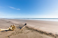 Panama Barqueta beach, logs on the shoreline