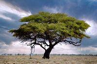 Landschaft im Etosha Nationalpark, Namibia, landscape at Etosha National Park, Namibia