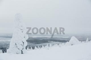 Finnischer Märchenwald, Kittilä, Finnland