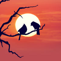 Tree Silhouette and Two Birds against Sunset