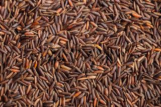 Uncooked red rice. Raw wild rice.