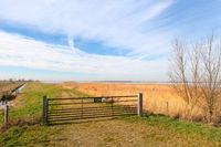 Dutch landscape polder