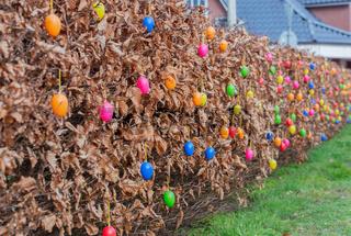 Gartenhecken sind mit Ostereiern zu Ostern bunt dekoriert