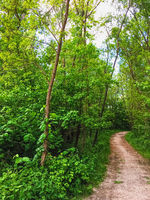 Countryside woods as rural landscape, amazing trees in green forest, nature and environment