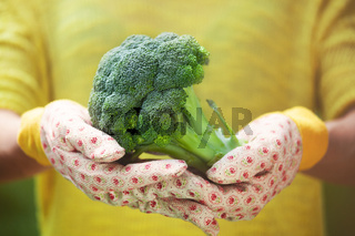 Anonymous person with big fresh broccoli in hands