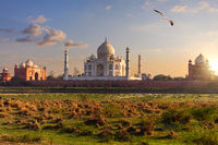 Taj Mahal back view from the meadow of Agra, India