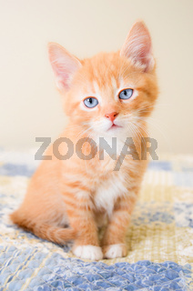 Cute orange kitten sitting on a blue and yellow quilt