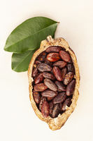 Fresh roasted cocoa beans in a pod with leaves on beige background..