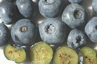 20200730_Vaccinium corymbosum, Kulturheidelbeere, northern highbush blueberry008.jpg