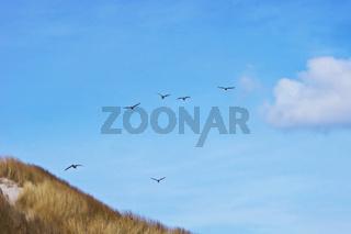 Fliegende Möwen über den Dünen