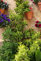 Potted plants and flowers in a garden