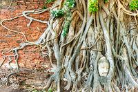 Buddha head in tree roots at brick wall