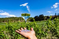 a glass of pale white wine on the hand