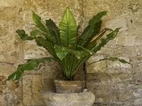 palma auf der Insel Mallorca