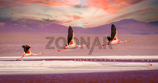 Flamingos flying over Laguna Colorada, Bolivia at sunset