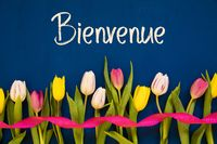 Colorful Tulip, Bienvenue Means Welcome, Ribbon, Blue Background