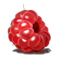Ripe red Raspberry isolated on white background. Sweet berry icon. Delicious and healthy dessert.