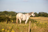 A horse standing on top of a lush green field