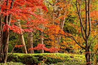 Beautiful trees in various colours in Autumn