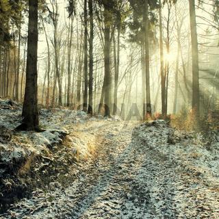 winter wald schnee bäume landschaft