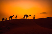 Cameleers, camel Drivers at sunset. Thar desert on sunset Jaisalmer, Rajasthan, India.