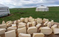 Mongolian gurt from sour milk drying