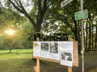 Protest gegen Baumfällung im Park