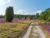 Wanderweg in der Lüneburger Heide, Niedersachsen, Deutschland