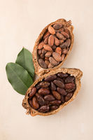 Unpeeled and fresh roasted cocoa beans in a pod on beige background.