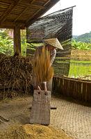 Junger Mann drischt eine Garbe Reis auf dem traditionellen Dreschbrett, Luang Prabang, Laos