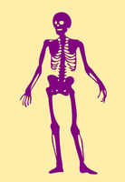 skeleton doodle clipart
