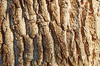 Maserung von Baum Rinde als Nahaufnahme für Textur Hintergrund