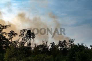 Rauchentwicklung bei einem Waldbrand