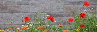 Farbenfrohe Blumenwiese mit verschiedenen Wildblumen vor einer Mauer als Hintergrund.