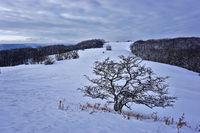 Winterlandschaft auf dem Filsenberg, Schwäbische Alb