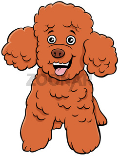 poodle toy dog cartoon animal character
