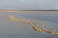 Kruste aus Steinsalz auf dem Assale Salzsee, Hamadela, Danakil Depression, Afar Dreieck, Äthiopien