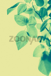 Green leaves as abstract vintage nature background, herbal foliage in spring garden, retro gravure style, floral leaf backdrop for botanical holiday brand design