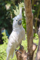 white parrot on branch