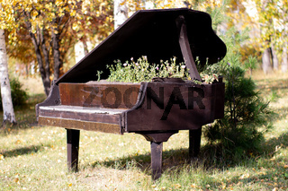 The bed for flowers equipped in an old black piano in the city park. Petunia flowers in an unusual creative bed